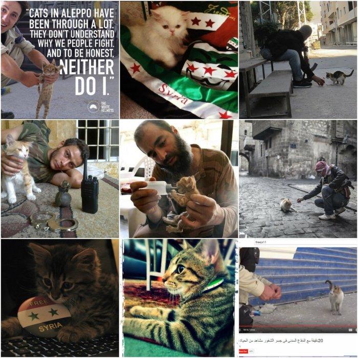 FSA Kitten Campaign
